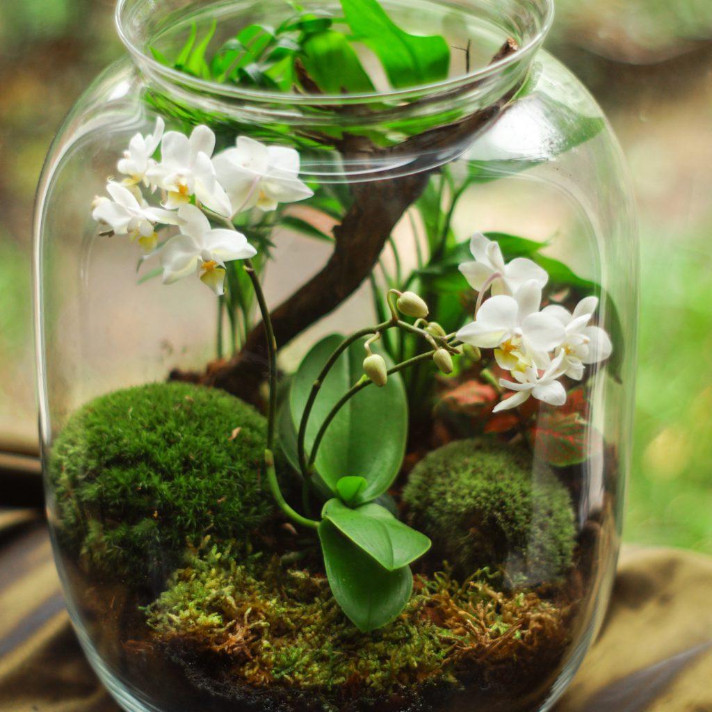 Dekoracje na ślub i wesele - las w szkle, zieleń, kwiaty