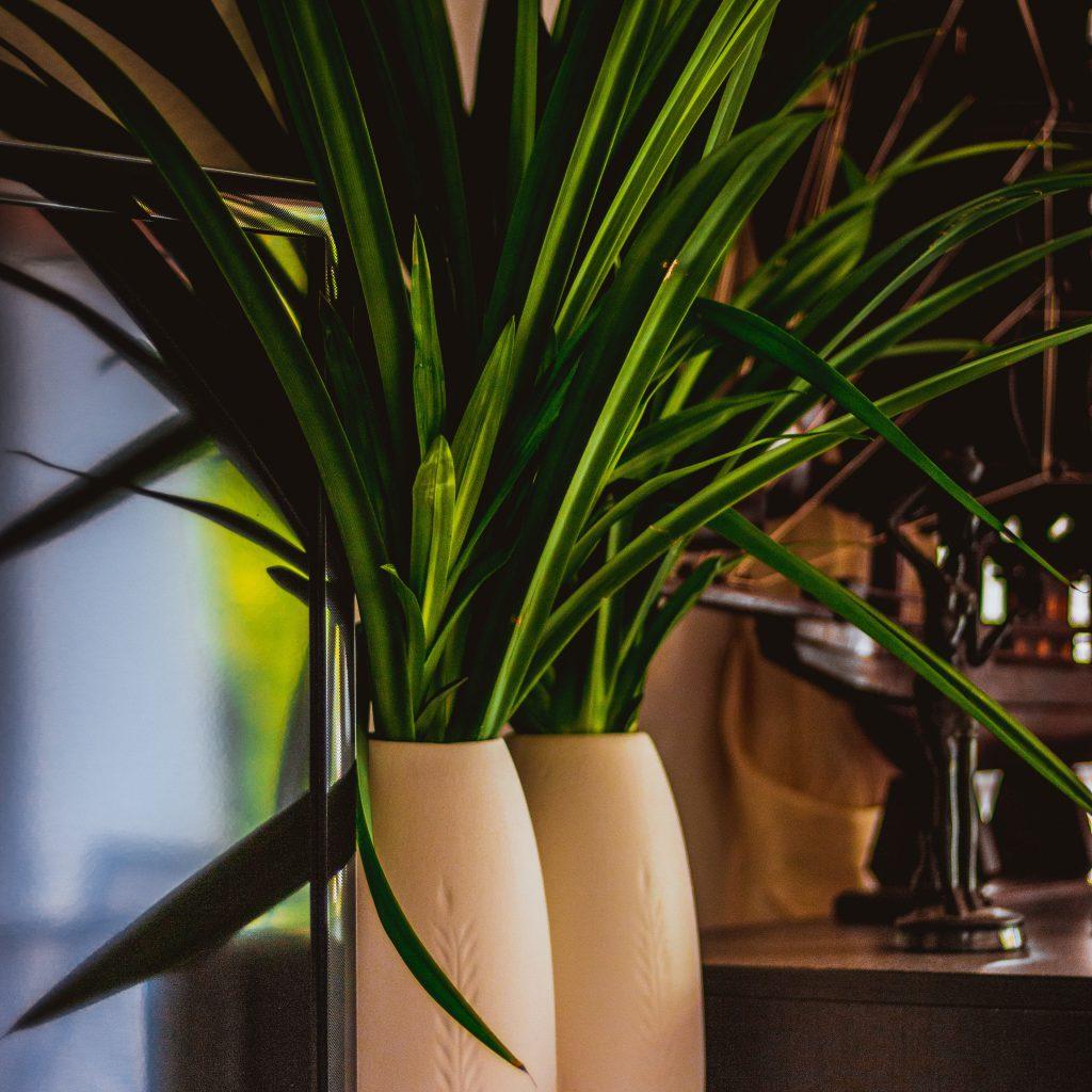 Dekoracje dla firm - kwiaty zieleń dla firm biur