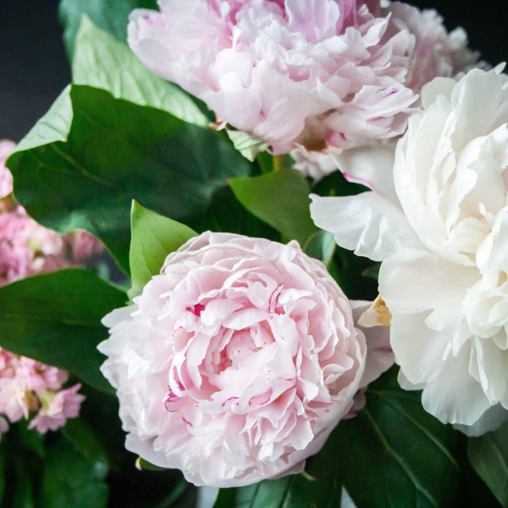 Piwonie luksusowe kwiaty na ślub i wesele